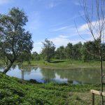 """Cremona, """"BioBlitz"""" nel Parco del Po e del Morbasco"""